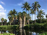カアナパリカイコース18番ホール右横の池と巨大なヤシの木